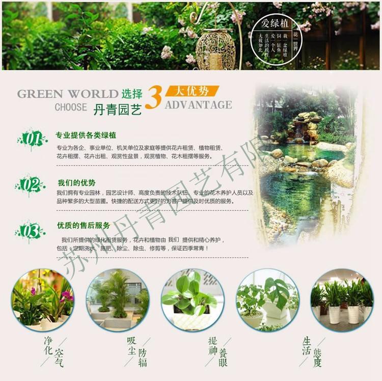 苏州植物租赁